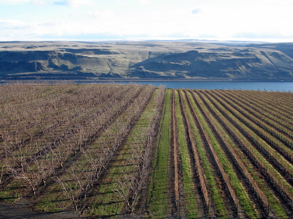 Maryhill Winery gorge